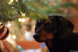 Season's Greetings from Canine HealthCheck
